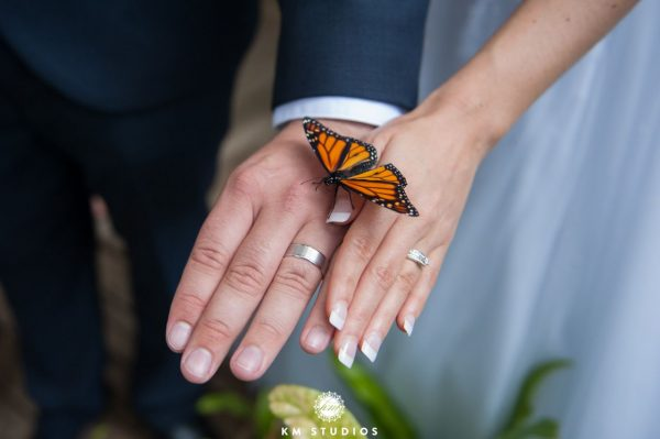 Island Wedding Venues Queensland